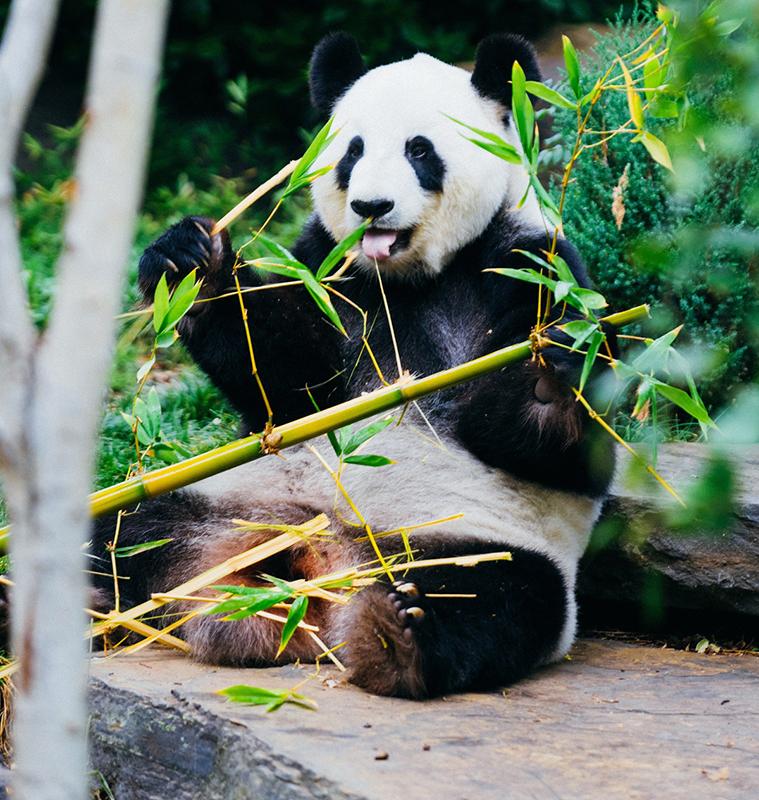 Toothbrushes for Green Pandas